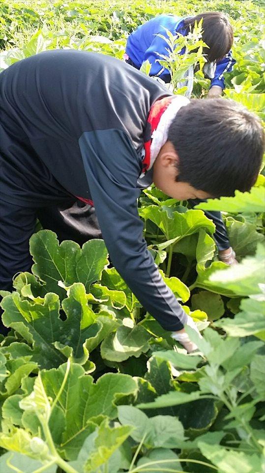 farming-1707-1