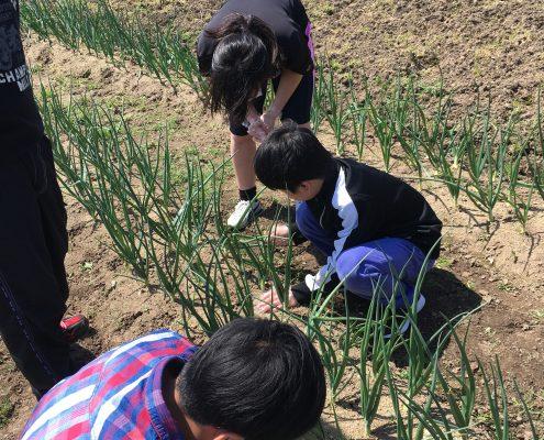 farming-4 (3)